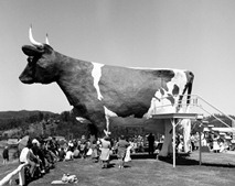 The Big Cow at the Suncoast Dairy, Old Bruce Highway, Kulangoor, north of Nambour, August 1976